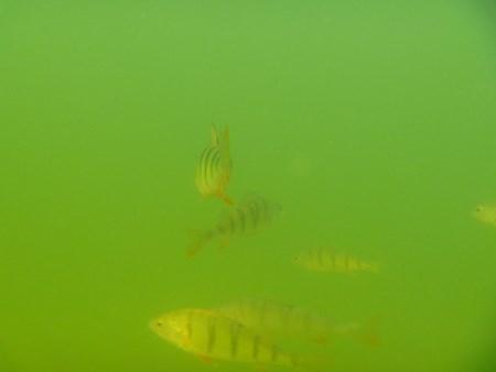 rybki.JPG -